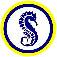 Swim Ulster Skills Academy
